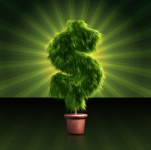 How will you grow your money tree?